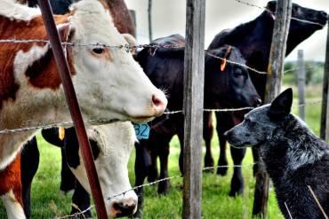 APIA: Fermierii mai pot depune doar miercuri modificari la cererile de plata din campania 2018